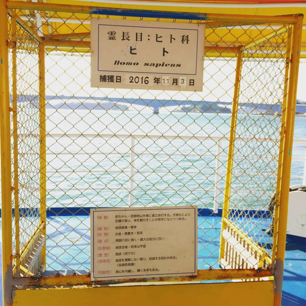海中水族館シードーナツの捕獲状況