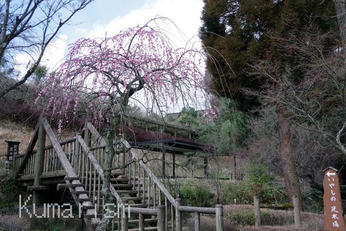白河水源 公園内風景