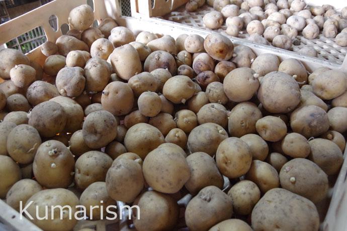 百草園で収穫される野菜はすべて有機無農薬野菜
