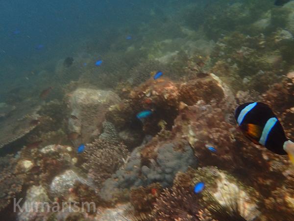 たくさんの熱帯魚!