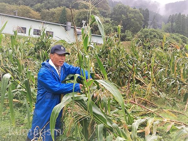 収穫方法をレクチャーする代表の市原さん。