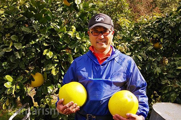 大きい!おいしい!八代の三大特産品「晩白柚」を育てる農家さんに取材しました★