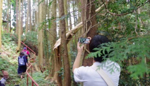【波野地区フットパス】 五感で自然を味わう!?知識豊富なガイドさんと歩く自然堪能コース