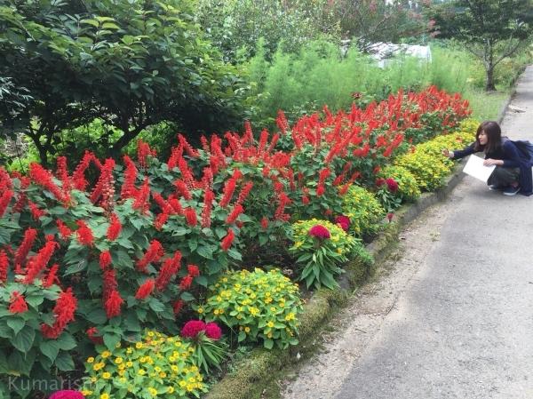 きれいな花の並ぶ道