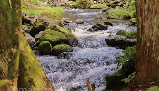 【南小国フットパス】水と緑が綺麗すぎるっ!阿蘇・南小国の自然を堪能する山歩き