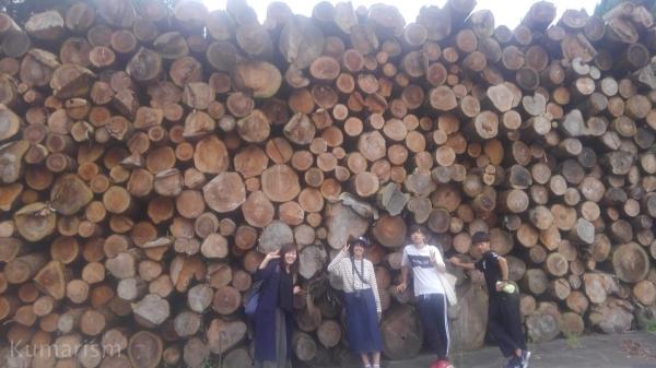 木材の資材置き場での一枚