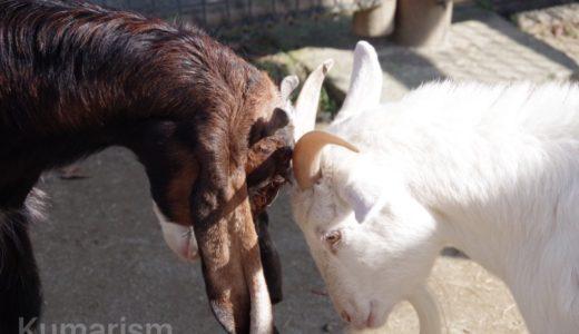 [熊本市動植物園] 700頭の動物がお出迎え!全面開園した動物園へいこう♪