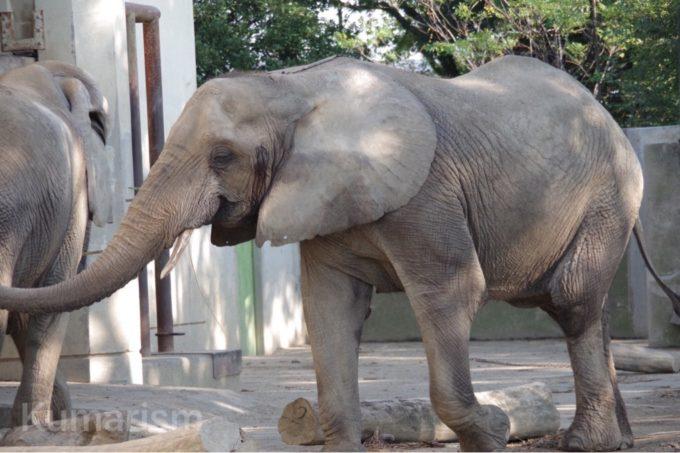 熊本市動植物園のゾウ