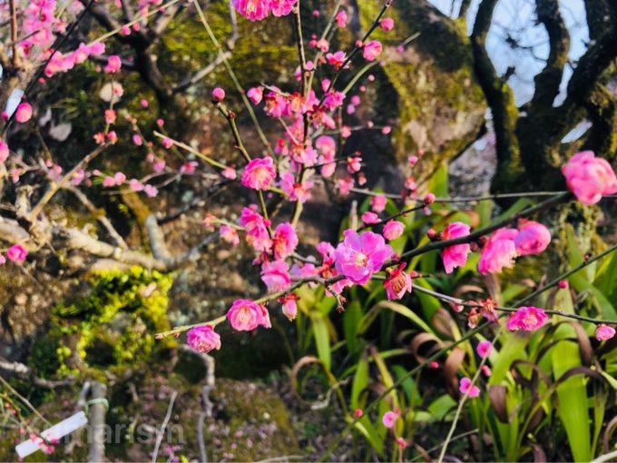 熊本市動植物園の植物