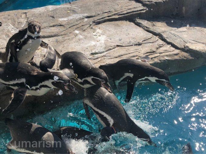 熊本市動植物園のペンギン